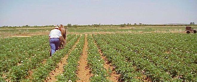 agriculturii