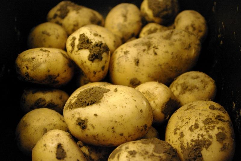 cartofi (1)