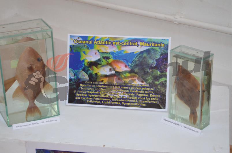 expo marina (1)