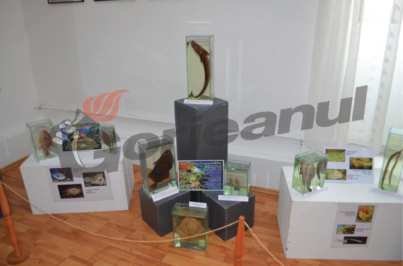 expo marina (8)