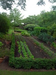 gradina-de-legume-cu-salata