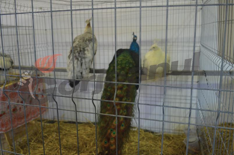 expozitie animale si pasari (17)
