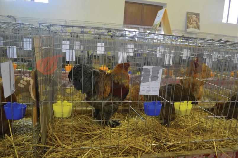 expozitie animale si pasari (18)