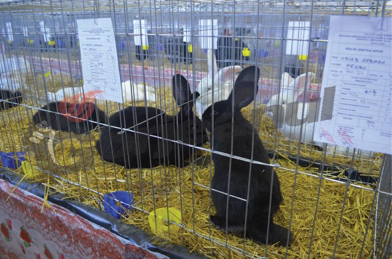 expozitie animale si pasari (2)