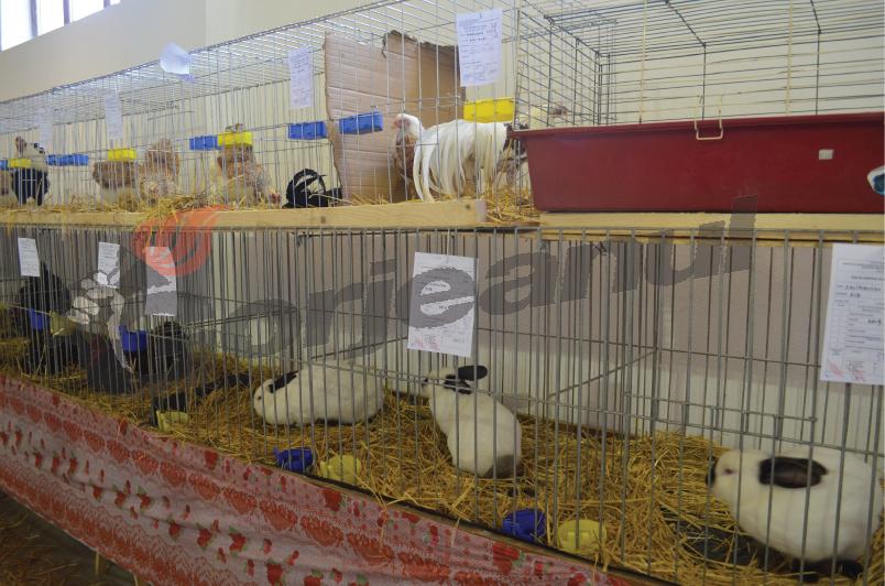 expozitie animale si pasari (60)