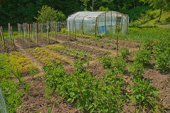 gradina legume