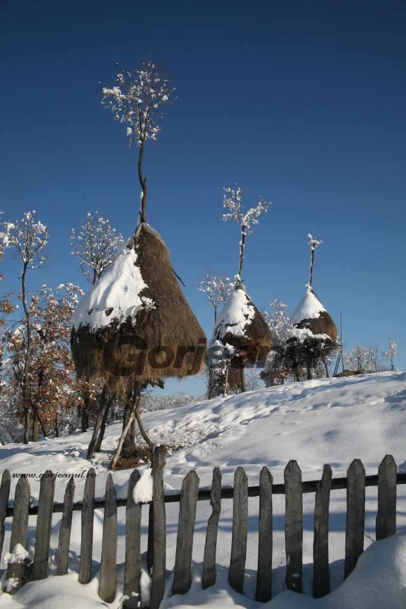 iarna la sohodol (2)