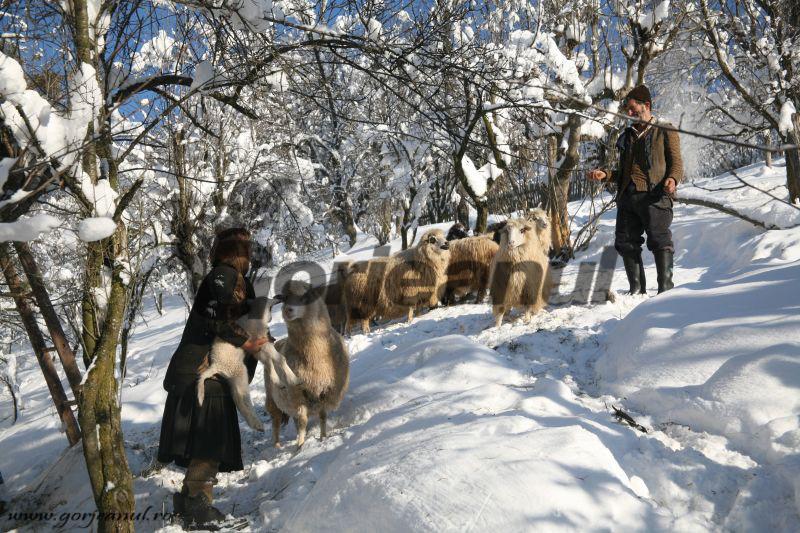 iarna la sohodol (7)